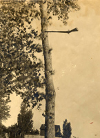 Gun embedded in tree as a result of a tornado in New Prague, Minnesota, in 1912
